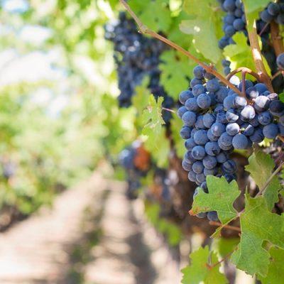 Grupul Halewood Wines Romania a redus cu 50% timpul de prelucrare si organizare a datelor in urma utilizarii solutiei CPM de la Senior Software