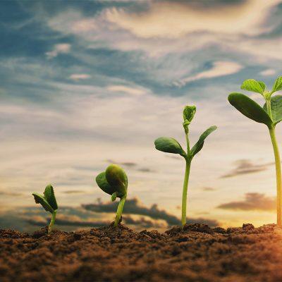 Agroland gestioneaza comenzile mai usor cu sistemele Senior Software
